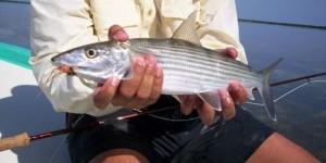 bonefish-600x300